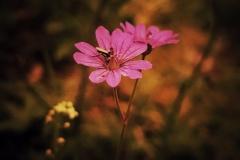 Naturfotografie-15