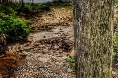 Naturfotografie-40