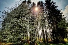 Naturfotografie-41
