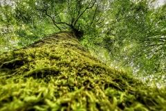 Naturfotografie-46