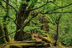 Naturfotografie-47