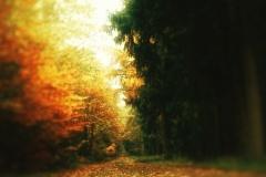 Naturfotografie-49