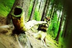 Naturfotografie-57
