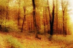 Naturfotografie-58