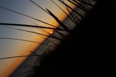 Naturfotografie-61