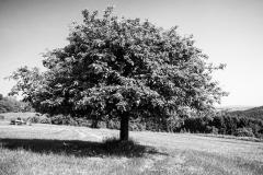 Naturfotografie-65
