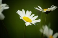 Naturfotografie-73