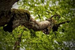 Naturfotografie-74