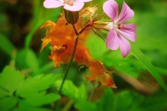 Naturfotografie-9